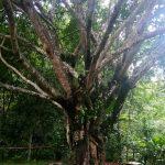 Mengikuti Bali Usada Health Meditation Selama 10 hari di Pusat Meditasi Kesehatan – Ini review dan pengalaman Aulia dari BRO-IN.com