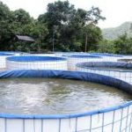 Inilah Cara Beternak Lele di Kolam Terpal yang Mudah bagi Pemula