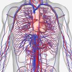 Kenali Penyebab Gangguan Pada Organ Peredaran Darah Manusia