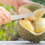 Pecinta Durian, Cari Tahu Cara Memilih Durian yang Bagus Yuk!