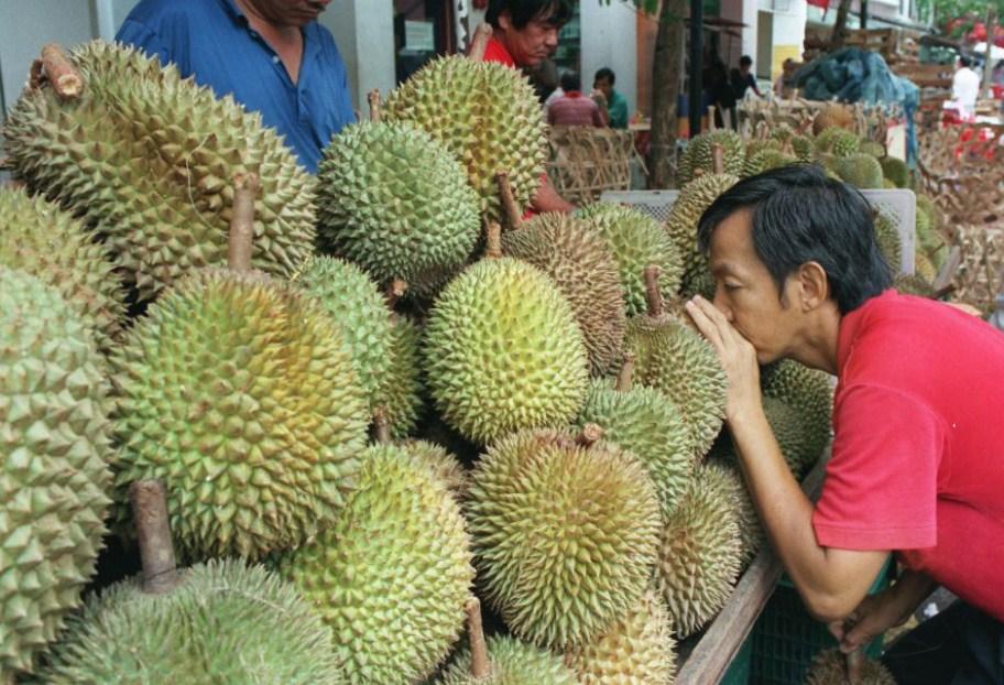 cara memilih durian yang bagus